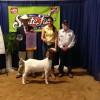 State Fair report: Junior Doe goat show, showmanship results