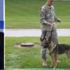 Video: Hudson key to Army soldier, dog reuniting