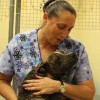 New animal shelter director takes over