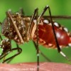 Town officials to spray for mosquitos