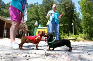 Kevin Spradlin | PeeDeePost.com Otis, left, greeted many fellow dogs, large and small, with something less than a ferocious-sounding bark.