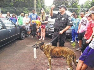 Photo courtesy Rockingham Police Department Sgt. Glen Harris with K9 Breston during last year's Junior Police Academy.