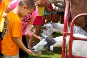 Kevin Spradlin | PeeDeePost.com Adan King, 5, of Rockingham, feeds a goat Thursday at Leath Memorial Library in Rockingham.