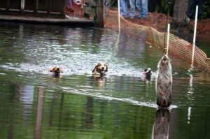 Kevin Spradlin | PeeDeePost.com A heat of the 50-yard water race Saturday at Richmond County Coon Club.