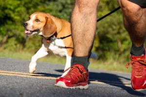 Kevin Spradlin | PeeDeePost.com Charles Johnson runs with Mangum, a beagle rescued near the finish line of the Mangum Track Club's 15-mile initiation run in May.  Mangum appeared to have been abandoned. Charles and Veronica Johnson, of Fayetteville, made room for him in their home.