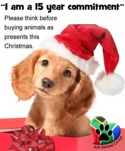 The Ark Animal Centre hopes that family members realize that a puppy or kitten might not make the best Christmas gift.