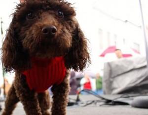 Kevin Spradlin | PeeDeePost.com The award-winning CoCo checks out the paparazzi at Harrington Square.
