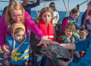 Photo by Kevin E. Geraghty Coast Guard family members and civilian passengers about Coast Guard Cutter Kodiak Island out of Atlantic Beach North Carolina prepare to release a rehabilitated sea turtle off the North Carolina coast Dec. 15, 2014. The Coast Guard, in cooperation with the North Carolina Resources Commission, helped release a total of 19 rehabilitated sea turtles into the Gulf Stream off the coast of North Carolina including Kemp's ridley sea turtles, green sea turtles and a loggerhead sea turtle.