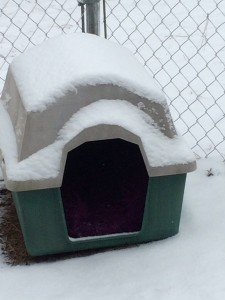 Howard Richardson, of Rockingham, reminds readers to care for their beloved pets during these cold temps.