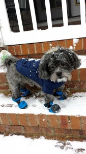 Pepper, of Hamlet, was caught on camera by Laurin Barrington looking a bit unsure of the snow this morning in Hamlet.