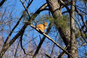 Kevin Spradlin | PeeDeePost.com Cats don't seem to mind looking down on humans, especially when given such a beneficial vantage point from which to do so.