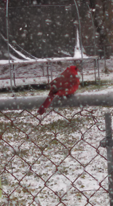 Photo by Rhonda Singleton in Laurinburg.