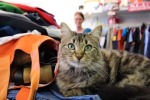 Kevin Spradlin | PeeDeePost.com The dogs go with the Marcengills, but Sophie the shop cat will stay at Rocking Trends.