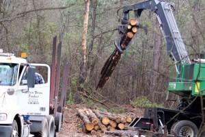 Kevin Spradlin | PeeDeePost.com Allen Bros. Timber Company, of Rockingham, was awarded the bid to implement a timber management plan after a public Request for Proposals.