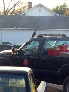 Richmond County Ranger Matt Gordon snapped this photo of a hawk perched atop his North Carolina Forest Service truck.