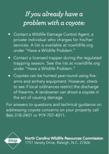 Coyote2